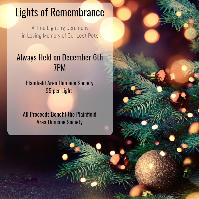 Lights of Remembrance Every December 6th
